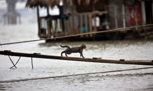 A cat runs across a wooden board over a river in Hanoi, Vietnam. This year World Water Day will be on 22 March, with the theme about water co-operation.