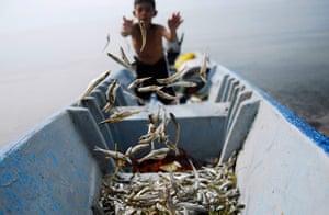 24 hours: San Salvador, El Salvador: A boy sorts fish known as Pepesca or Ejote