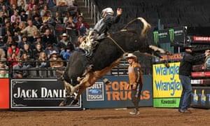 Shane Proctor, bull riding