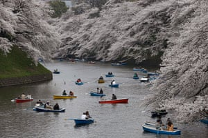24 hours: cherry blossoms along the Chidorigafuchi Imperial Palace moat  in Tokyo