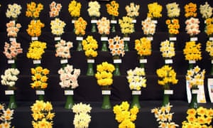 If you're suffering from the lack of spring you may be cheered by these daffodils on display at the RHS Great London Plant Fair in London today.