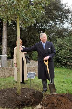 Not to be outdone, and just down the road, Prince Charles helped plant a young oak tree in the memory of Nobel Peace Laureate Professor Wangari Muta Maathai in the grounds of Kew Gardens in south west London.