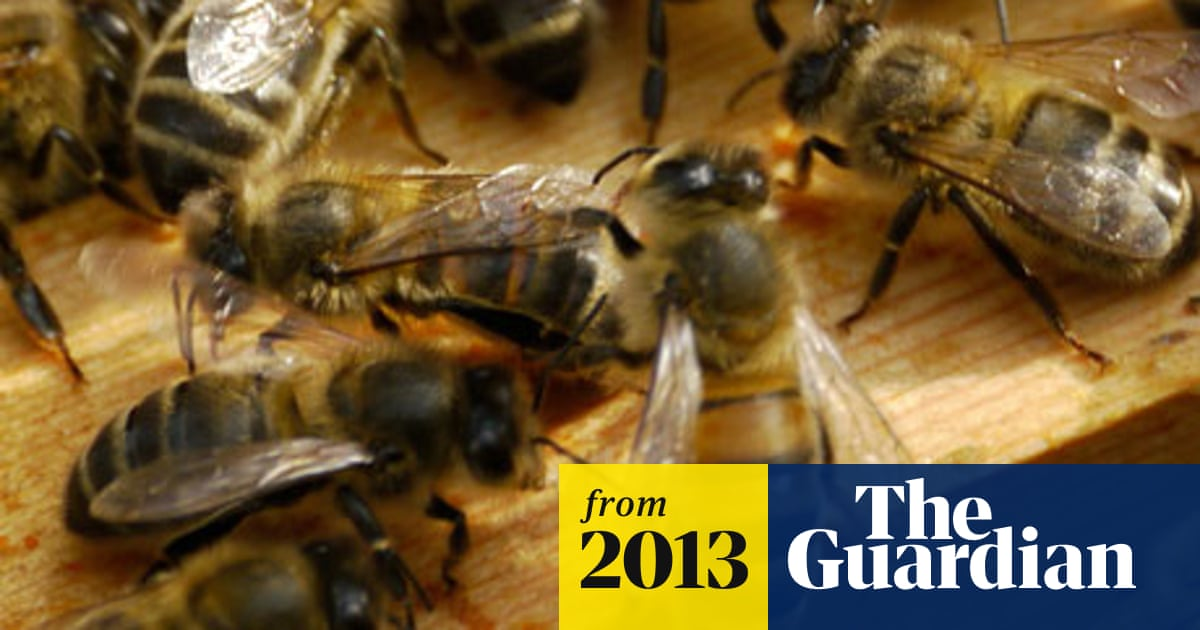 Pesticide makes bees forget the scent for food, new study finds