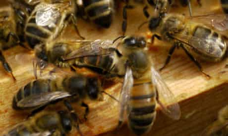 Pesticides confuse bees