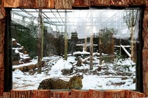 Week in wildlife: Animals at Twycross Zoo