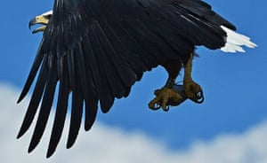 Week in wildlife: An African fishing eagle catches a fish
