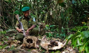 dr congo wildlife poaching