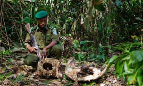 dr congo wildlife poaching