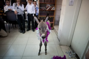 24 hours in pictures: 'Redemption of the Firstborn Donkey' Ceremony