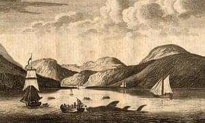 shark hunt on Arran, 1770