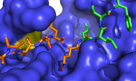 The structure of the FMDV 3C protease, caught in the act of cutting another protein.
