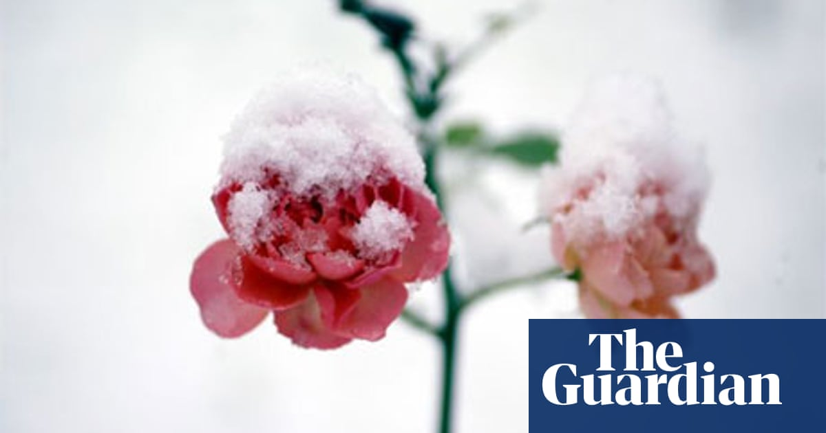With Winter Comes Inevitable Nostalgia >> Poem Of The Week The Snow Whirls Over The Courtyard S Roses By Tua