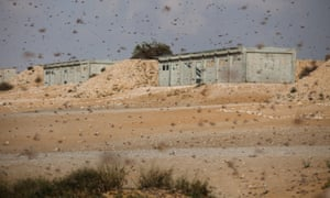 Day of the Locust: a swarm of locusts moves over an Israeli army fire range near the Egyptian border in Israel. Egypt and Israel have been swarmed with millions of locusts over the past few days causing wide spread disturbances.