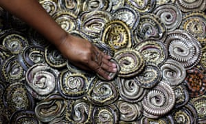 An Indonesian worker arranges snakes to be dried at a snake slaughterhouse in the village of Kapetakan, Indonesia. The dried snake meat is later exported to China and Taiwan as a material for medicine and food.