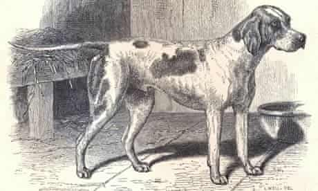 The first modern dog: a pointer called Major