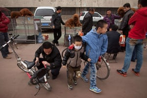 Mastiff Show: Children at the mastiff show in Baoding, Hebei province.
