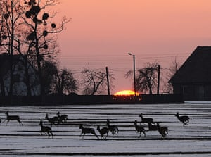 Week in Wildlife: A herd of deer runs through a snowy field in Poland