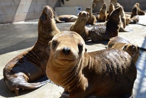 Week in Wildlife: Malnourished sea lion pups recover at the Marine Mammal Care Center