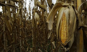 Climate change did not cause the Central Great Plains drought that ravaged US crops – scientists