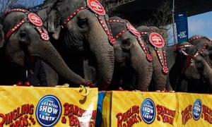 ringling bros elephant
