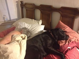Top pets: sleeping dogs: Sleeping dogs: Dog in bed
