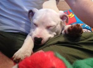 Top pets: sleeping dogs: Sleeping dogs: Dog asleep