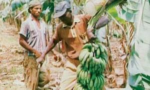 A banana plantation: a still from Mirror to the Soul.
