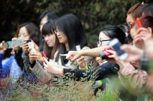 Pandas: Visitors capture the moment