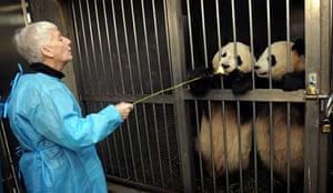 Pandas: A tourist feeds pandas
