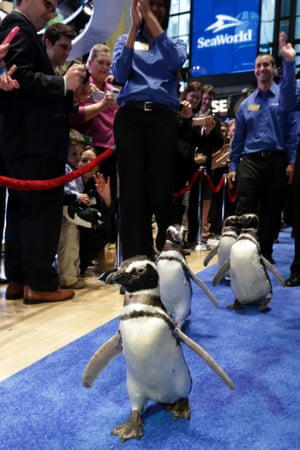 Penguins at New York Stock Exchange