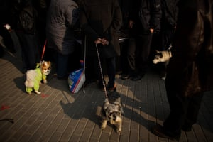 24 hours in pictures: Beijing, China,: Dogs wander around at a market )