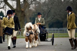 24 hours in pictures: Ardingly, UK: An exhibitor with miniture horses during the horse parade