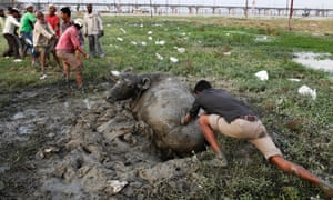 People try to rescue a buffalo which was trapped in mud in Allahabad, India.