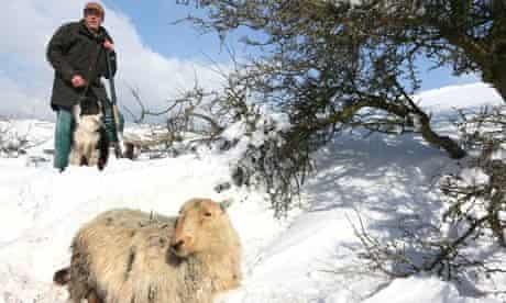 Gareth Wyn Jones and his sheepdog Cap with rescued sheep