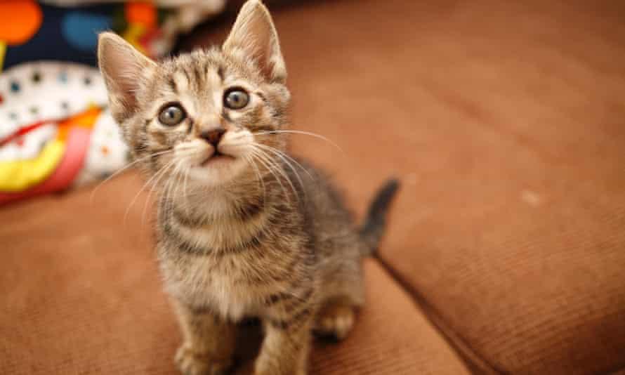 Naughty kitten.