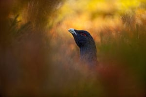 2013: GDT Nature Photographer of the Year 2013