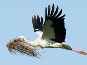 It's time for the first random animal picture of the day. It's a nest-building stork pictured near Hombrechtikon, lake Luetzelsee in Switzerland.
