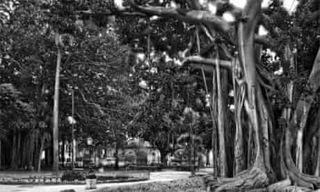 John Riddy: Palermo (Piazza Marina)