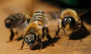 Bees are seen near their beehive in a garden in Saint-Aignan de Grand Lieu, western France. A global decline in the numbers of bees, the reasons for which are baffling scientists, is alarming everyone from farmers to European Union policy makers