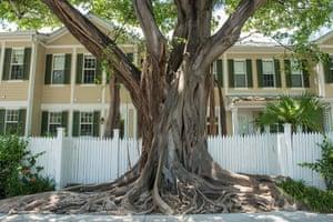 Key West City Guide: Key West Banyan Tree
