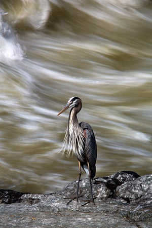 Week in wildlife: Potomac River from Chesapeake and Ohio Canal National Historic Park
