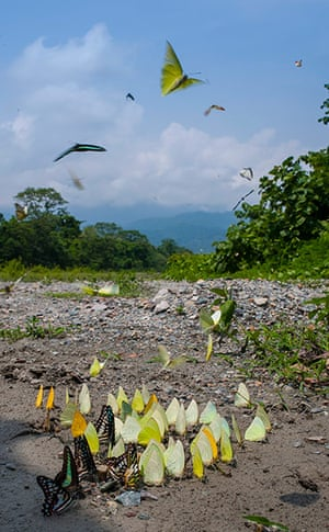Week in wildlife: Butterflies at the Buxa National Park in Alipurduar, India