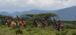 Week in wildlife: Samburu National Reserve,