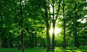 Park in sunlight