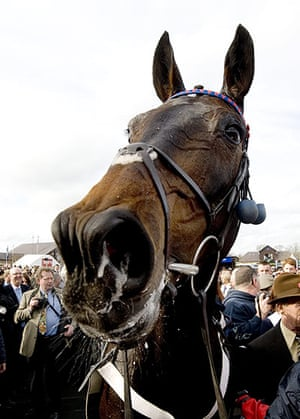 best of the week: Sprinter Sacre at Punchestown Races