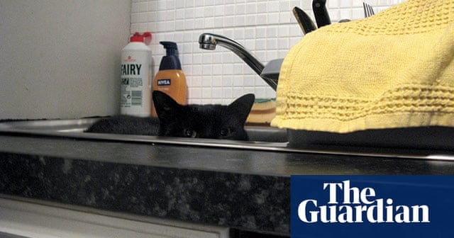 cd430833d8ac Naughty kittens and cheeky cats – your best pictures | Life and style | The  Guardian