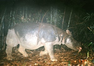 Impact of deforestation on wildlife in the greater Mekong