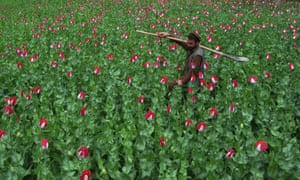 """""""There's some corner of a foreign field"""": An Afghan farmer in his poppy field in the Khogyani district, eastern Nangarhar province."""