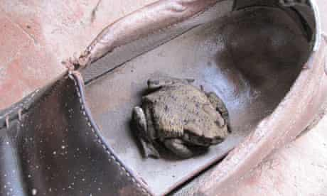 Toad in a shoe