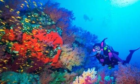 School of Anthias Near Soft Corals